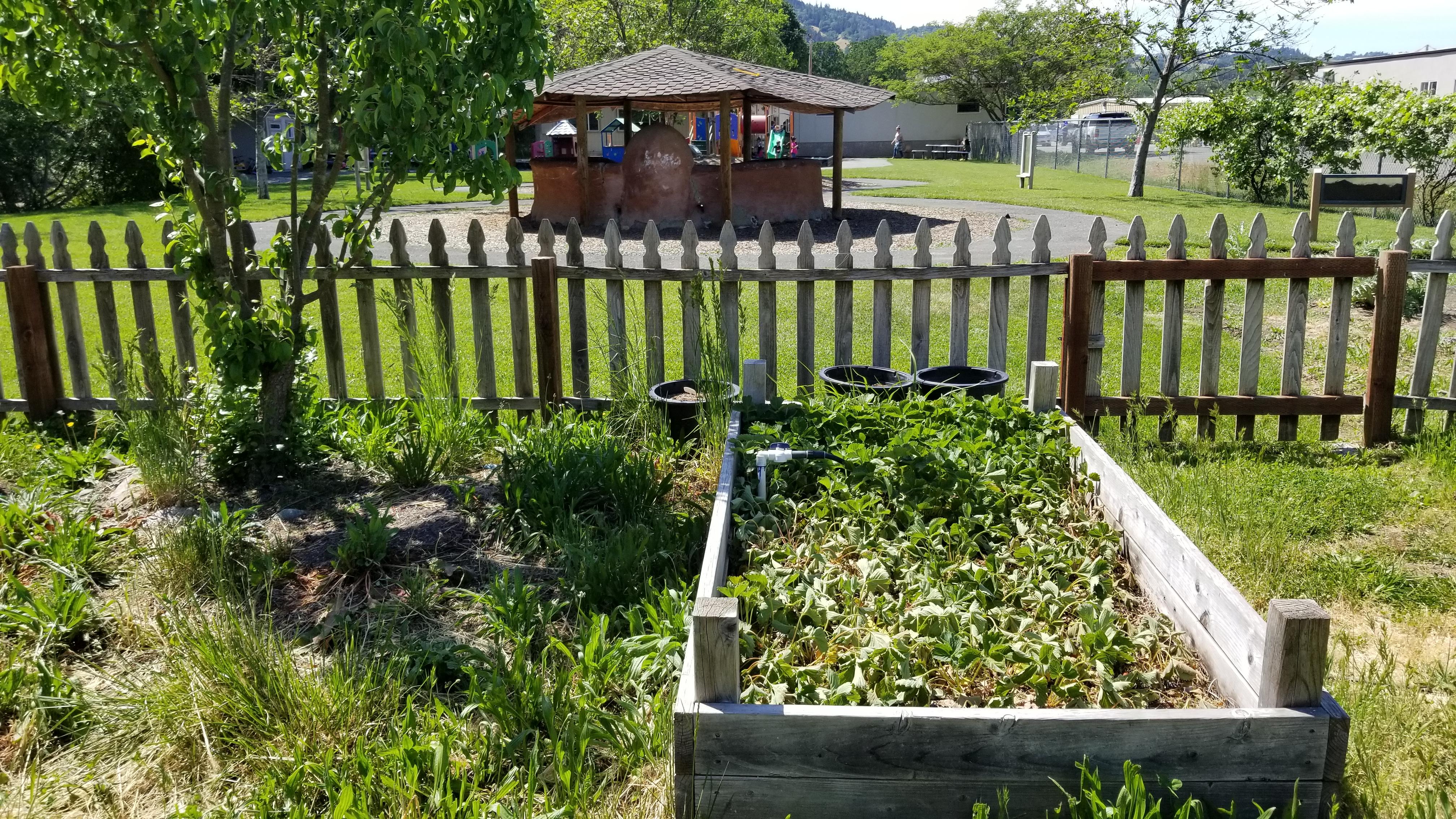 Head Start Garden